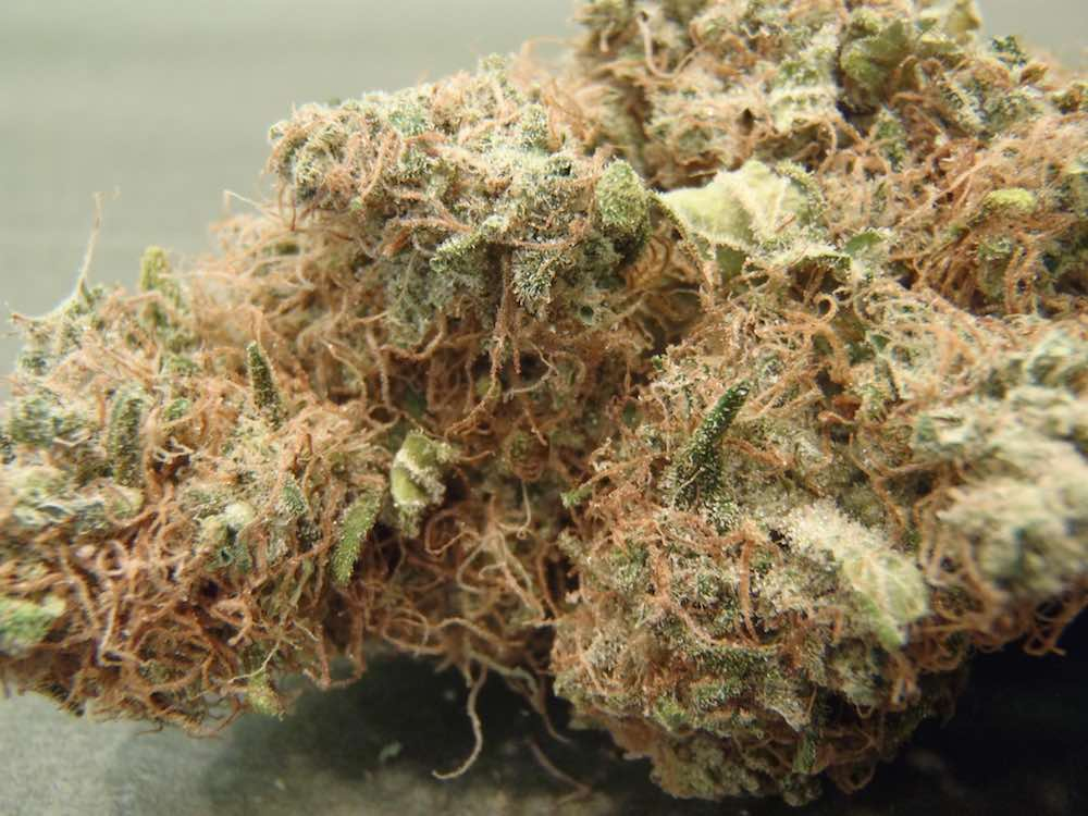 Featured strain: AK47