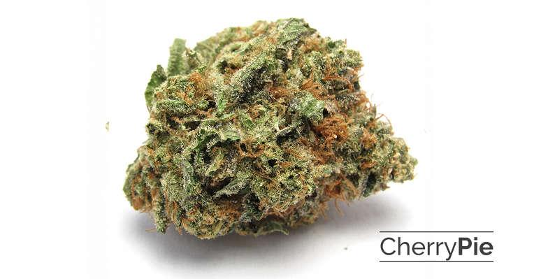 Featured strain: Cherry pie