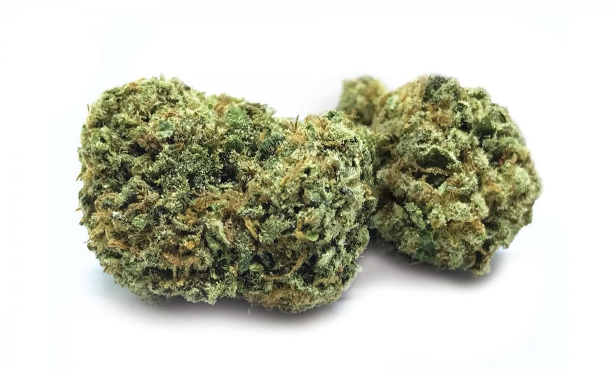 Strain of the Week: Gelato | Cannafo News | Marijuana