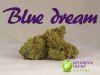 thumb_PRdbWXYFRbeLdLWM1OLL_blue dream low res.jpg