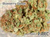 thumb_thumb_PARC-Dispensary_full_1134.jpg